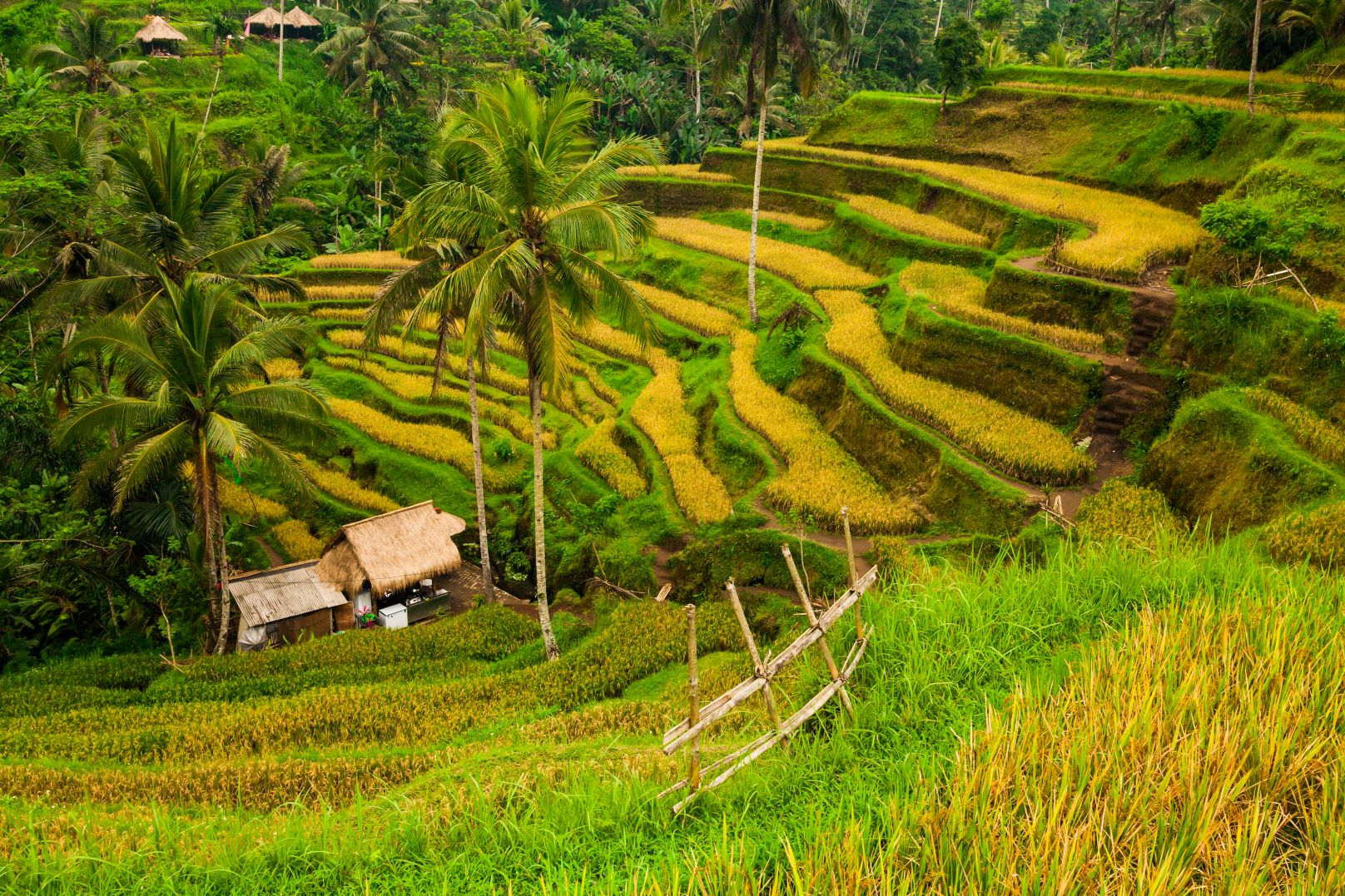 Rice fields, Bali, Ubud, Holiday with the kids, getaway, travel, suitcases, Indonesia, island life, beach, surfing, Seminyak, Canggu,Canggu, beachclub, hotel, relax, family, enjoy Bali, Bali with kids, What to do in Bali with kids, family holiday Bali
