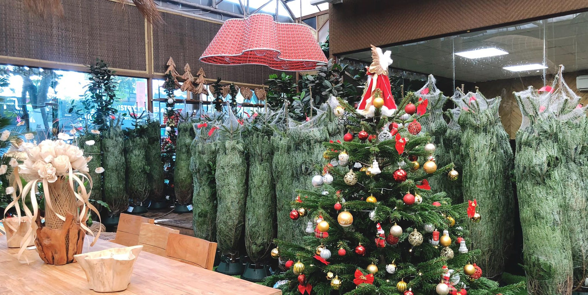 Christmas Vietnam, christmas Saigon, Christmas dinner, Christmas trees Saigon, where to buy real Christmas trees Ho Chi Minh City, cooking christmas dinner, Christmas recipes, christmas decorations Saigon, christmas decor
